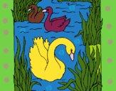 Dibujo Cisnes pintado por linda423