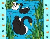 Dibujo Cisnes pintado por teuQihcoX