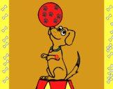 Perro de circo