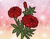 Flor de las maravillas