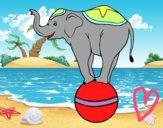 Dibujo Elefante equilibrista pintado por sheyla1