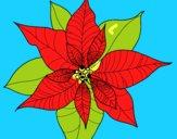 Flor de poinsetia