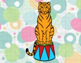 Tigre de circo