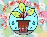 Cultivo Ecológico