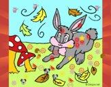 Conejo 3