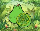 201742/fruta-exotica-ugli-comida-frutas-pintado-por-betsabet-11168311_163.jpg
