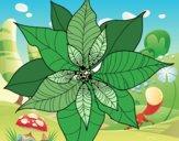 Dibujo Flor de poinsetia pintado por Agosss10