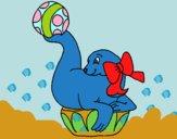Foca jugando a la pelota