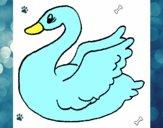 Cisne 2