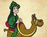 Rey Melchor en camello