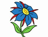 Flor silvestre 1