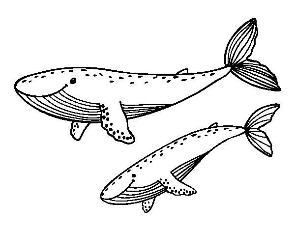 Dibujo de Ballenas para Colorear