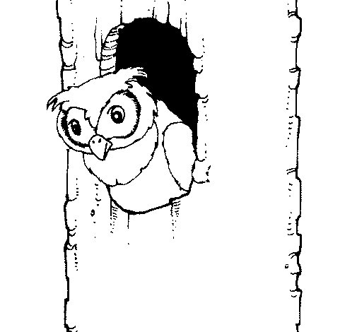 Dibujo de Búho para Colorear