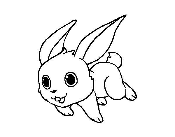 Dibujo de Conejo de campo para Colorear  Dibujosnet
