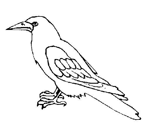 Dibujo de Cuervo para Colorear - Dibujos.net