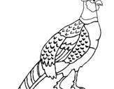 Dibujo de Faisán para colorear