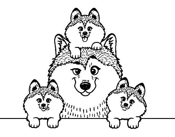Dibujo de Familia Husky para Colorear