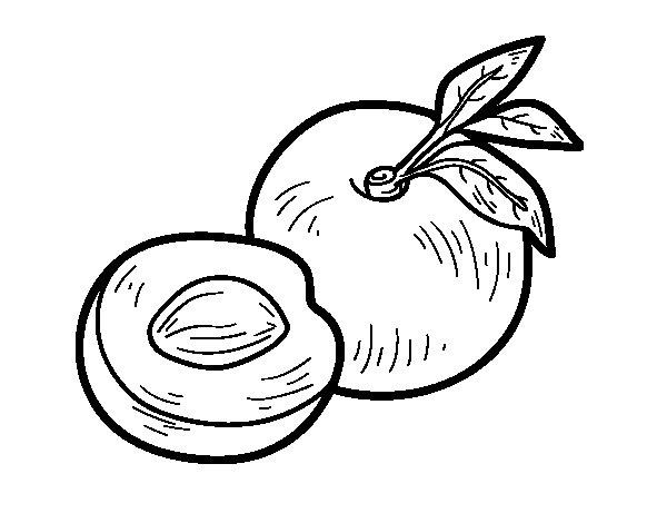 Dibujo de Nectarina para Colorear  Dibujosnet