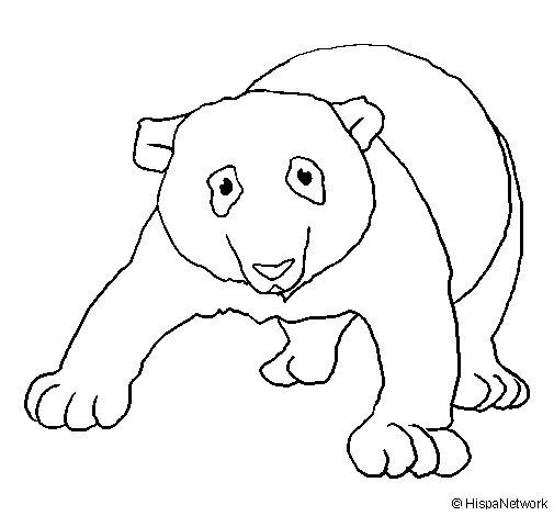 Dibujo de Oso panda 1 para Colorear