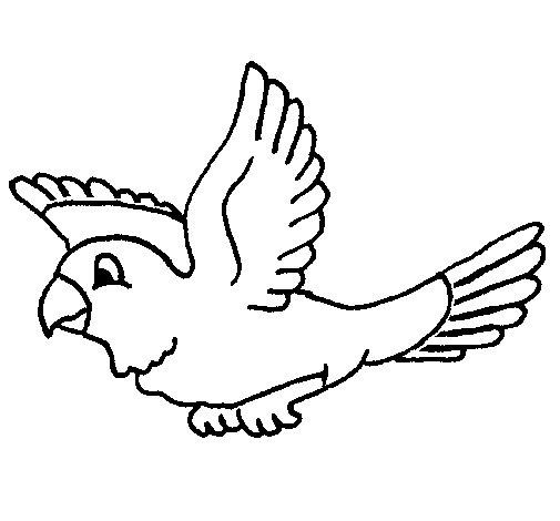 Dibujo de Periquito para Colorear