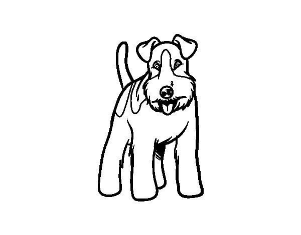 Dibujos Para Colorear De Cachorros De Perros: Dibujo De Perro Fox Terrier Para Colorear