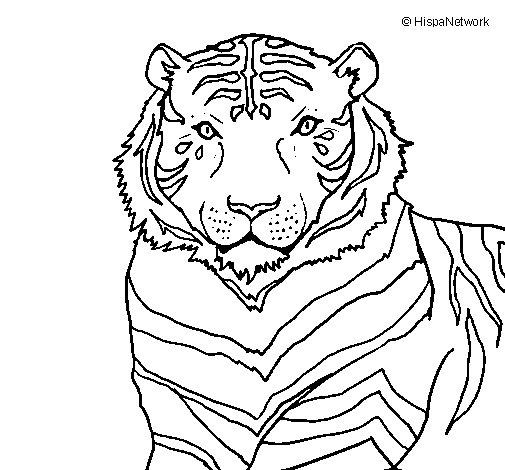 Dibujo de Tigre 3 para Colorear