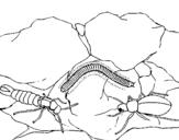Dibujo de Varios insectos para colorear