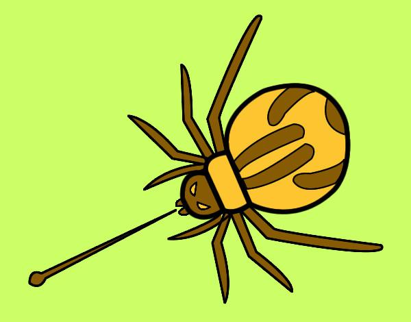 Dibujos De Arañas Para Colorear Dibujosnet