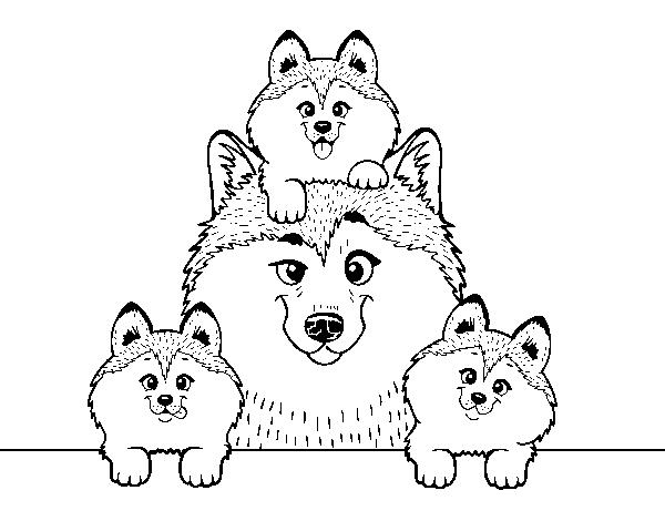 Dibujo de Familia Husky para Colorear - Dibujos.net