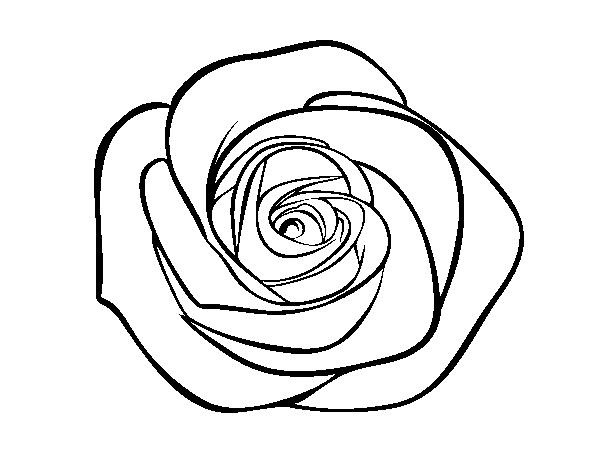 Dibujo de Flor de rosa para Colorear - Dibujos.net