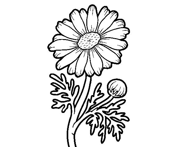 dibujo de flor silvestre para colorear