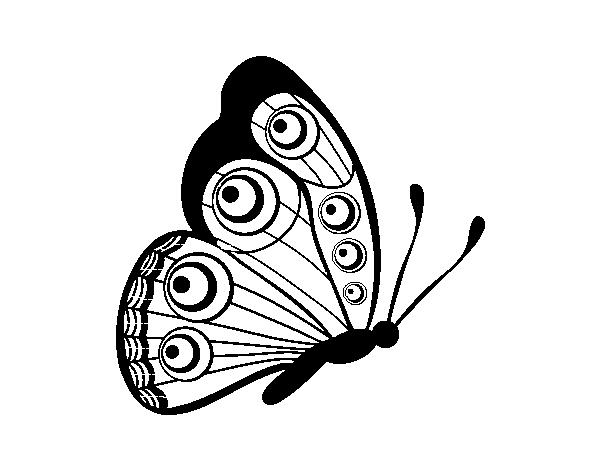 Dibujo de Mariposa dirección derecha para Colorear - Dibujos.net