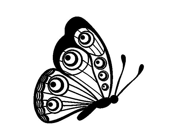 dibujo de mariposa dirección derecha para colorear dibujos net