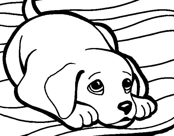 Dibujo De Perrito Alfombra Para Colorear Dibujosnet