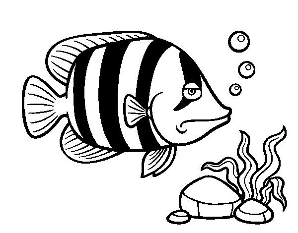 Magnífico Colorear Angel Fish Festooning - Páginas Para Colorear ...