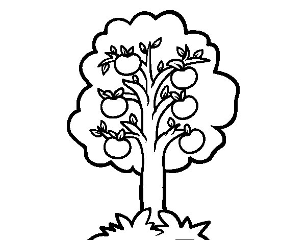 Dibujos Para Colorear De Arboles Frutales: Dibujo De Un Manzano Para Colorear