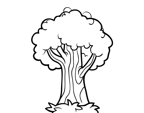 Dibujo de Un roble para Colorear   Dibujos.net